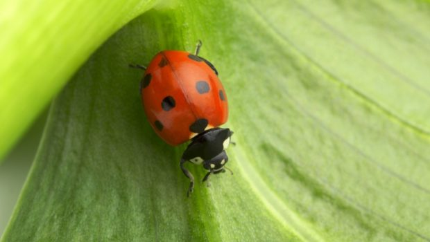 Not all insects are pests for your rural real estate.