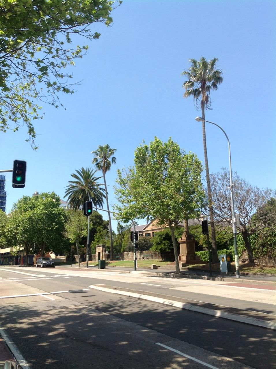 Washington Palms and Canary Island Date Palm