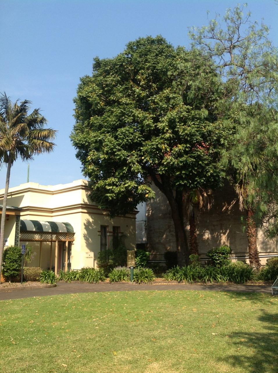 Blackbean and Kentia Palm