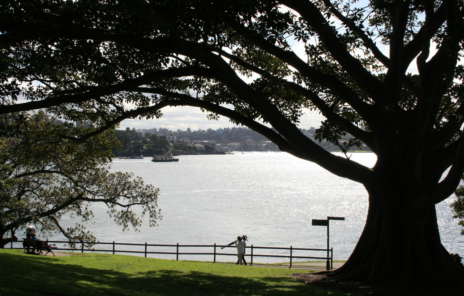 The Sydney landscape owes much to our 19th century parks and the signature plantings of the long term directors of the Sydney Royal Botanic Gardens at that time, Charles Moore (1848-1896) and Joseph Maiden (1896-1924).