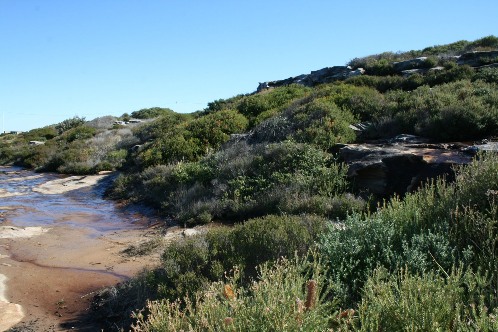 Natural heathland and shrubland dominated the sandy areas and exposed sandstone promontories.