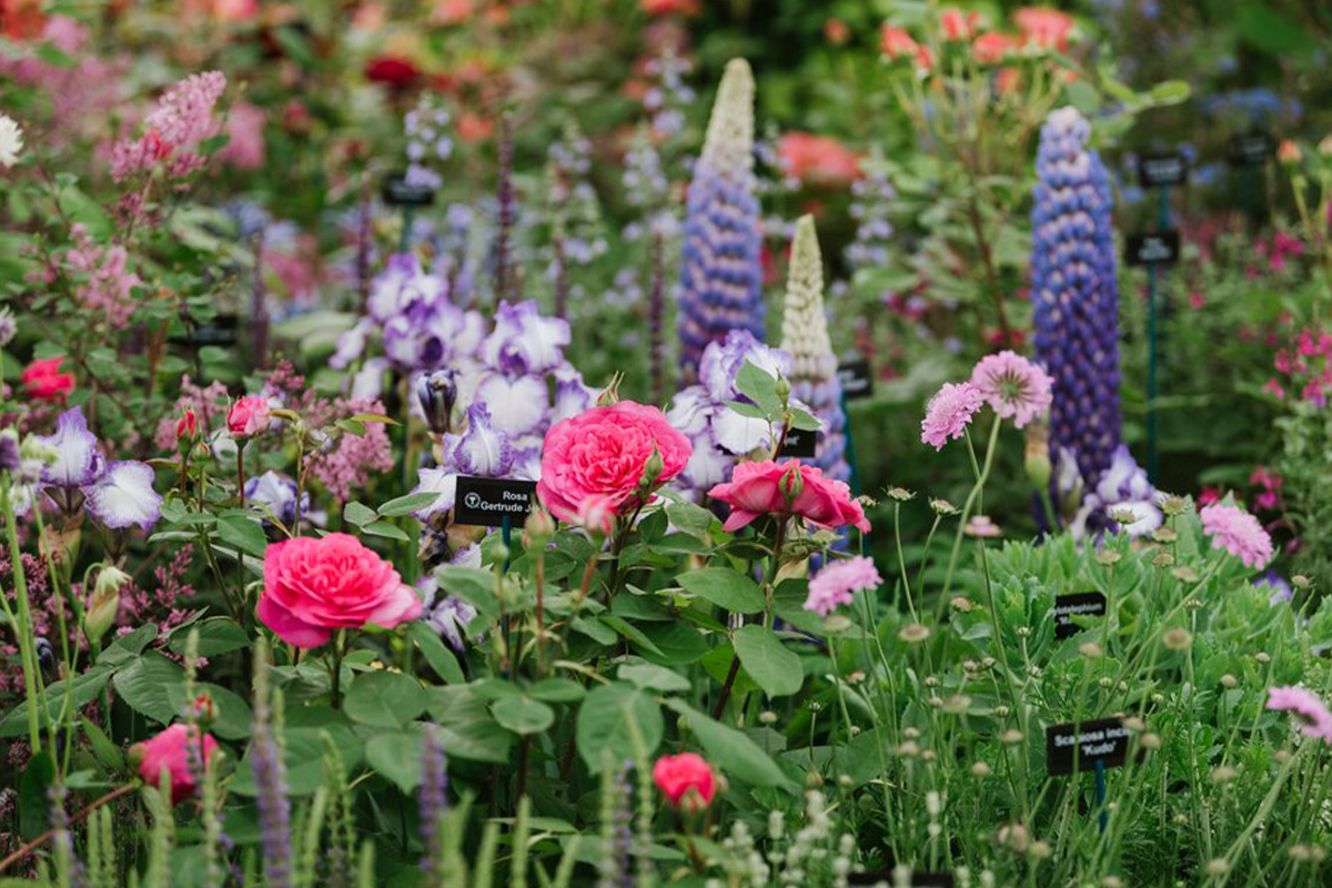 Chelsea Flower Show, RHS, virtual