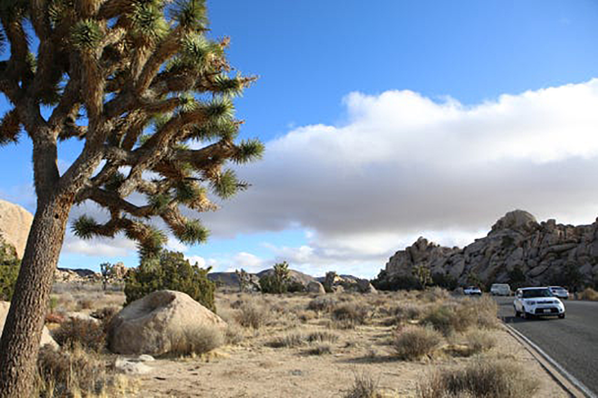 microplastics, joshua tree national park