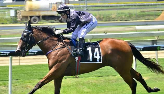 racehorse brisbane