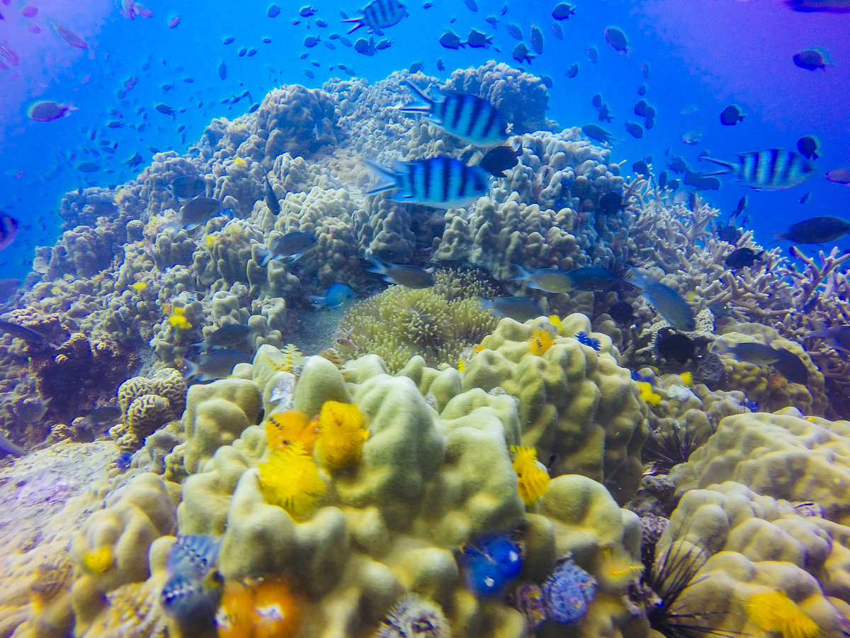Young coral reef formation sandy sea bottom