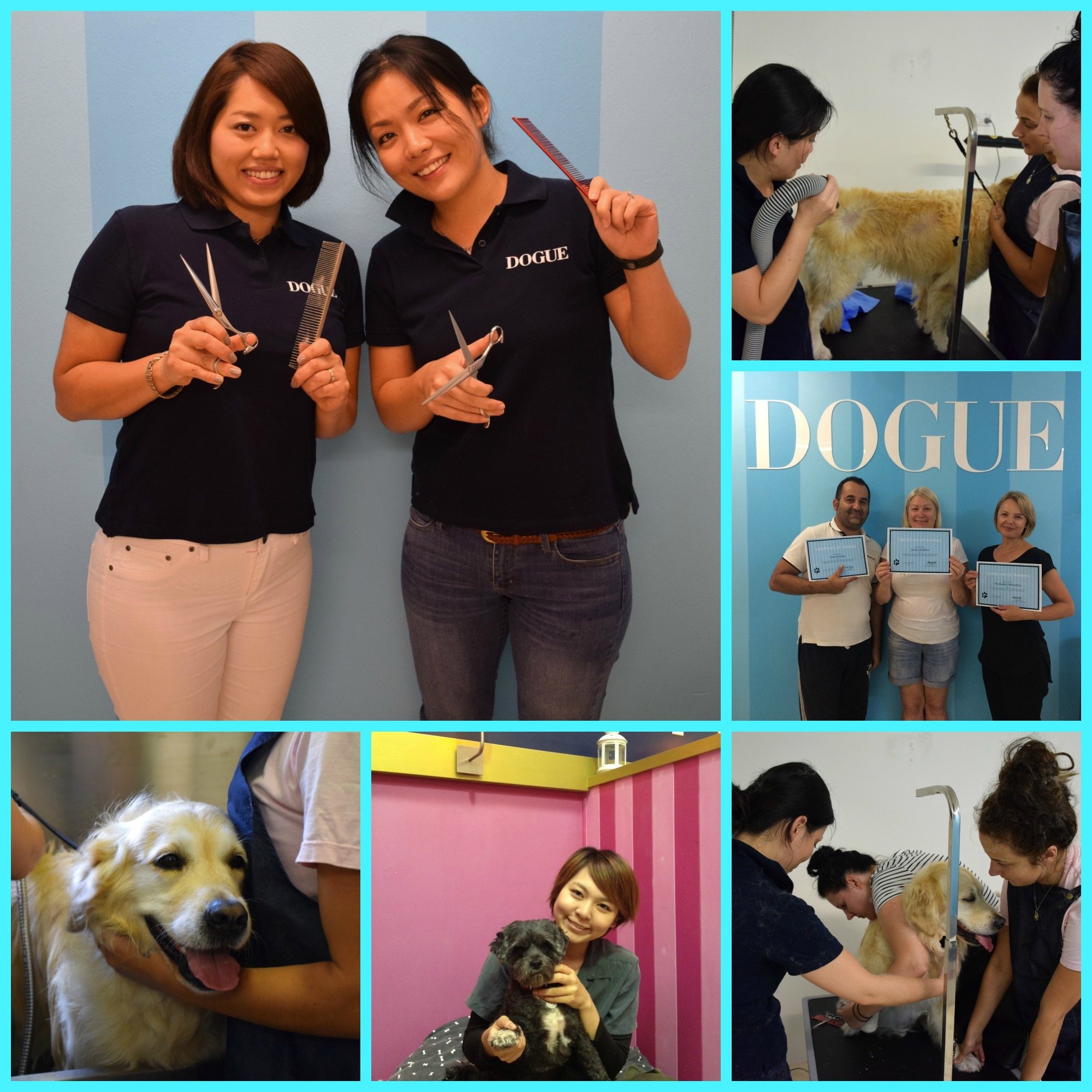 Grooming school  collage