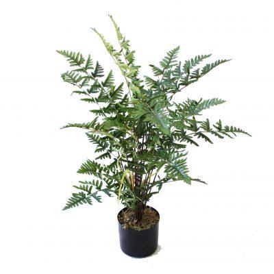 Artificial Ferns Best Artificial Ferns Trees Artificial