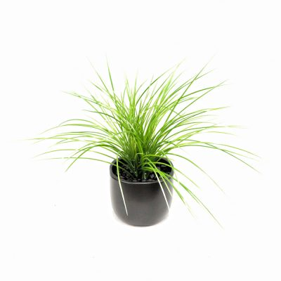 ARTIFICIAL MONKEY GRASS 50CM COMPLETE WITH FIBREGLASS POT