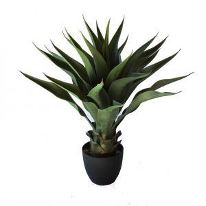 AGAVE 60cm green red tips