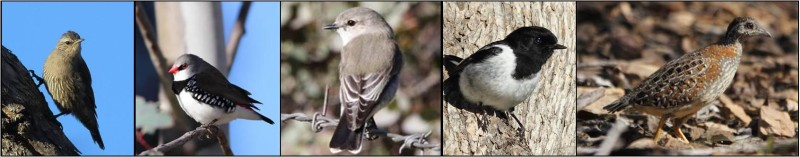 Feathered five banner pic