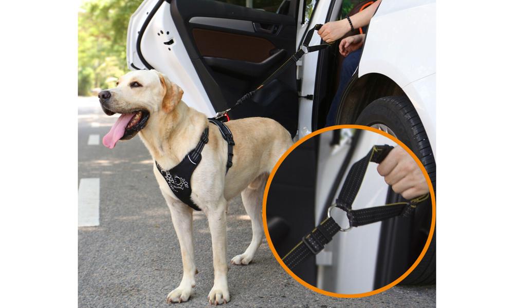 Ibuddy seat belt restraint for dogs 2925   web4