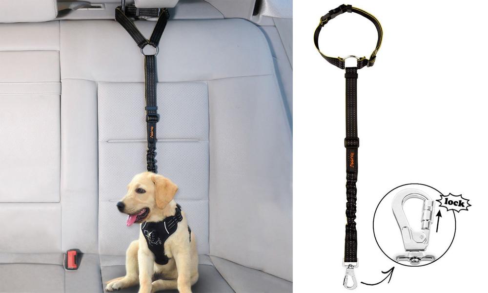 Ibuddy seat belt restraint for dogs 2925   web1