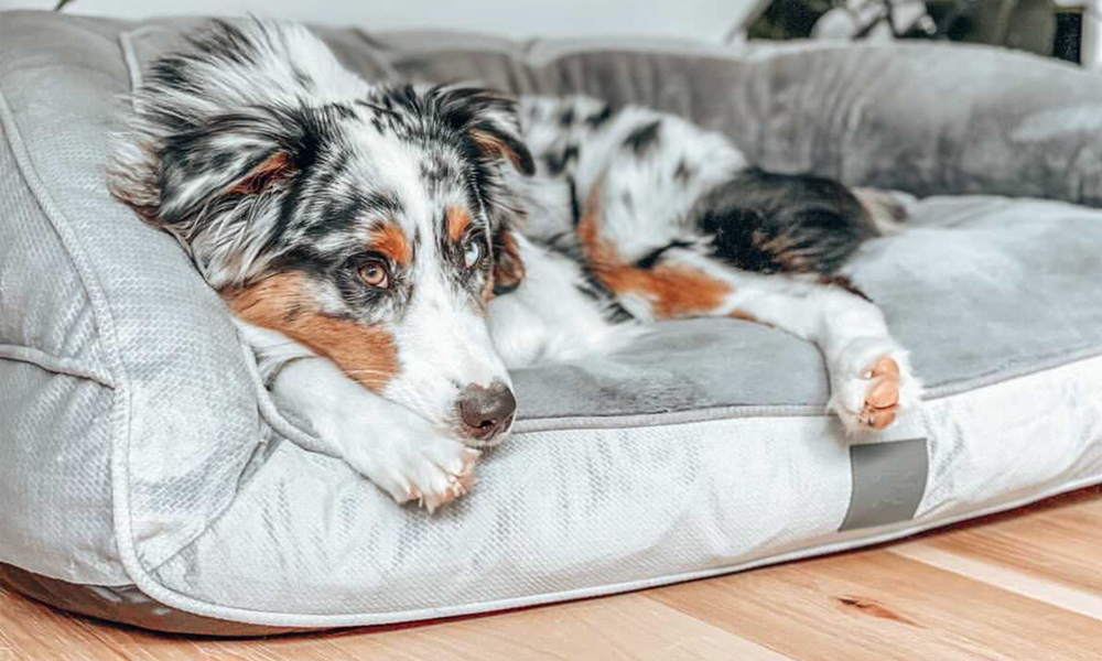 Portsea grey plush dog bed 2971   web4