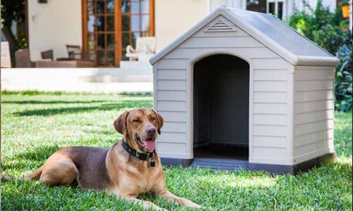 Curver dog house 2989   web1