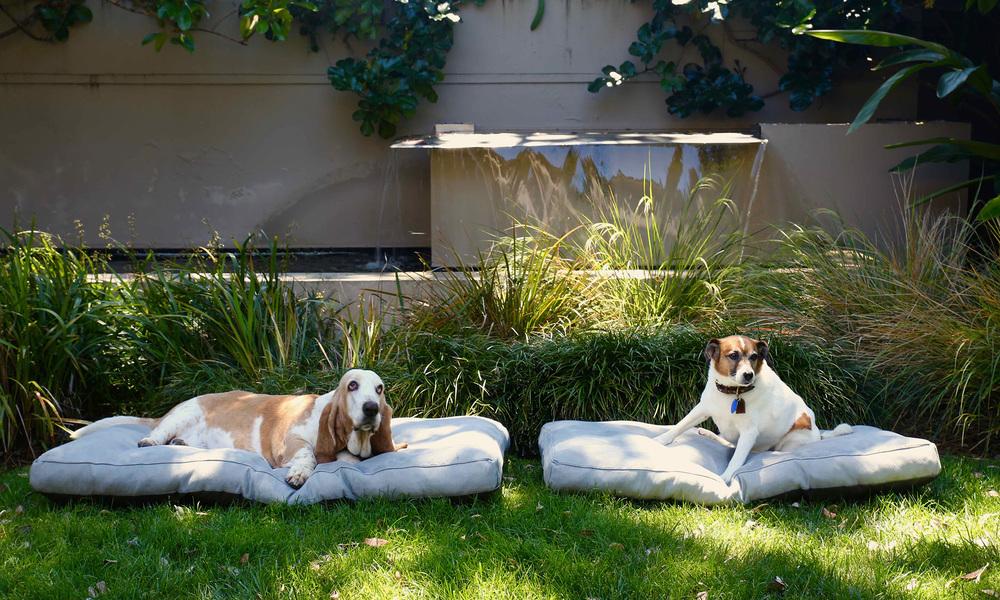 Deluxe memory foam dog beds   web3
