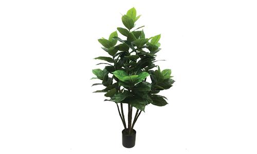 Rubber plant 777 1