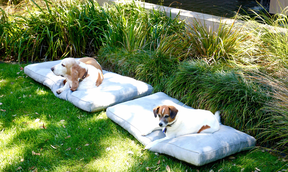 Deluxe memory foam dog beds   web2