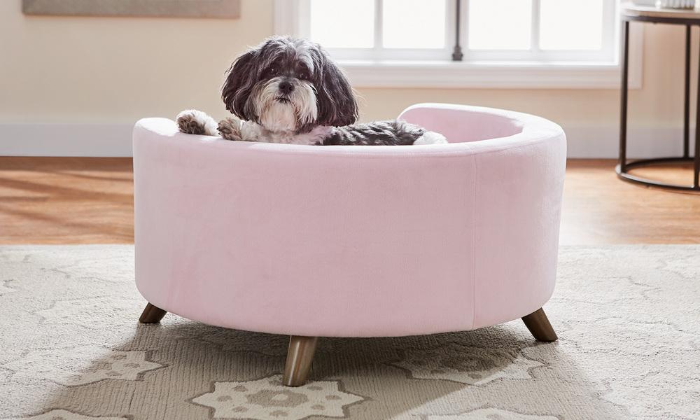 Bella dog sofa   web3