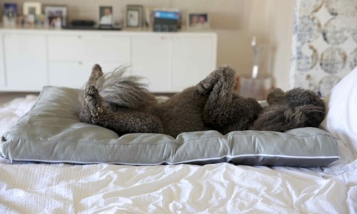 Dog bed george posing