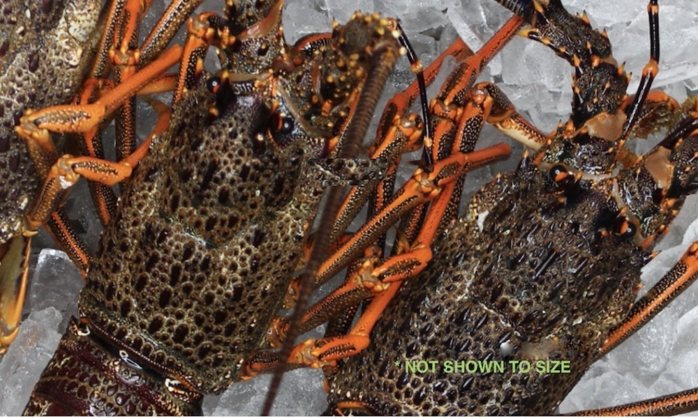 Crayfish not to size