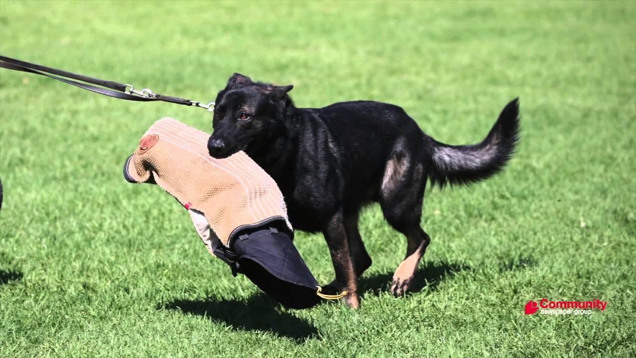 Police dog Santos helps apprehend East Perth burglary suspect