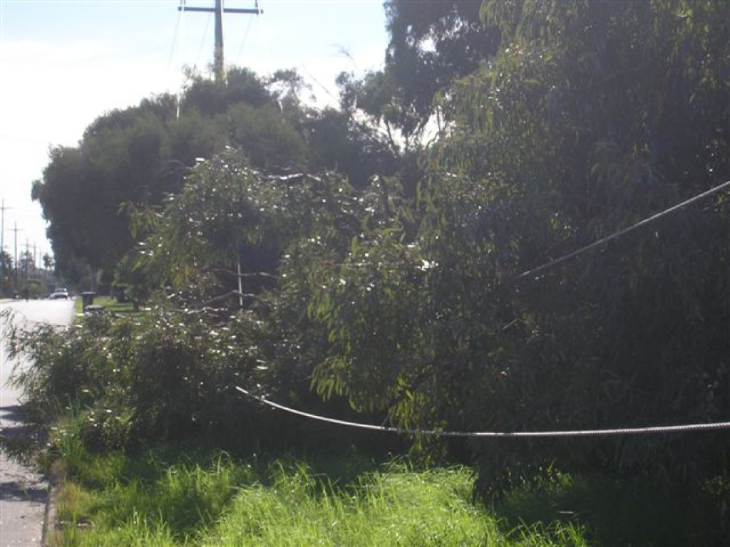 Powerline accidents on the increase in WA