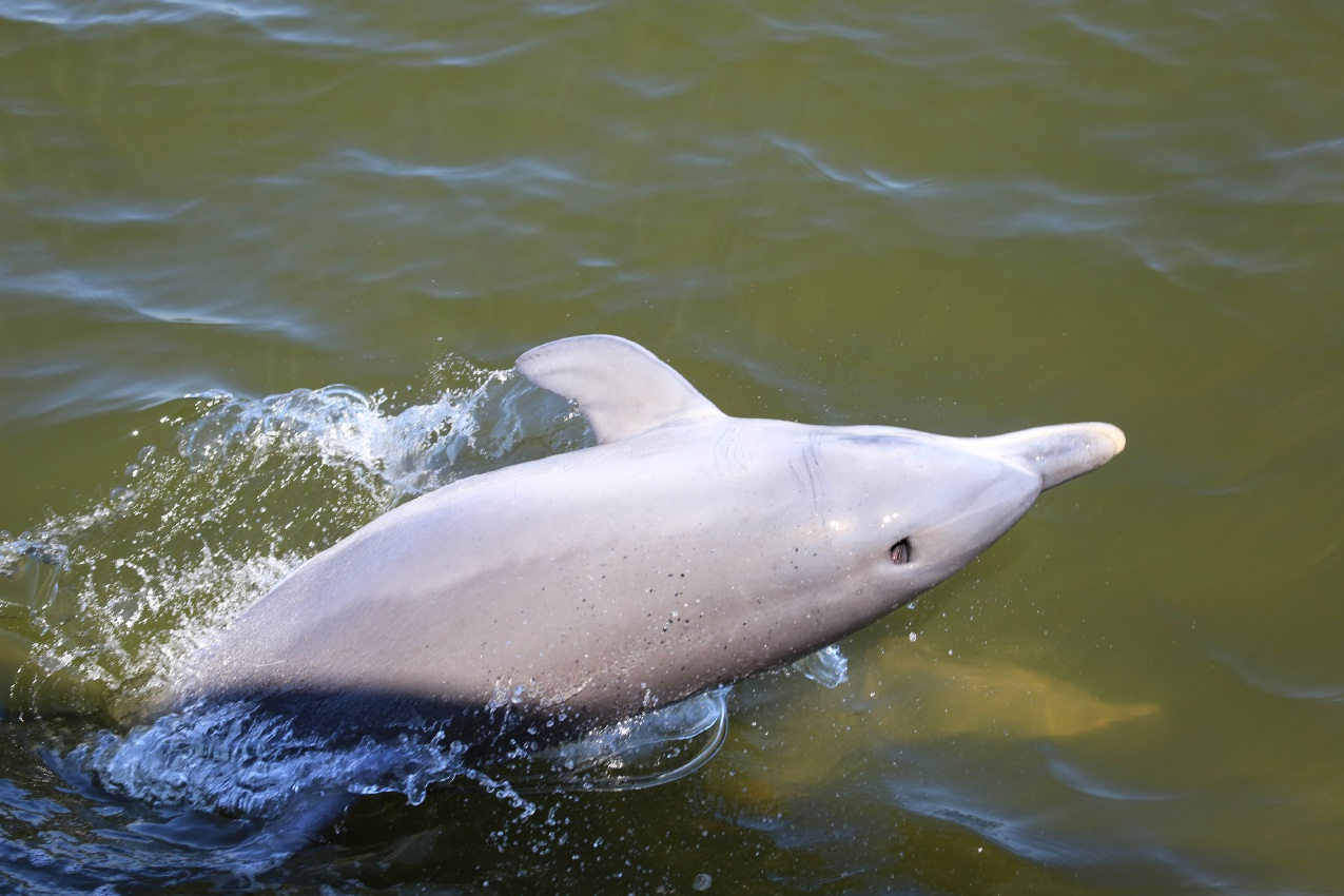 Discover dolphins in brochure at Stretch Fest