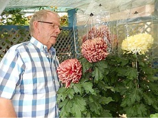Ralph Coombes with some of his chrysanthemums.