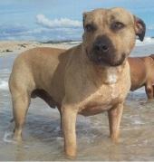 The Wharrams' dog Biggie was shot last year.