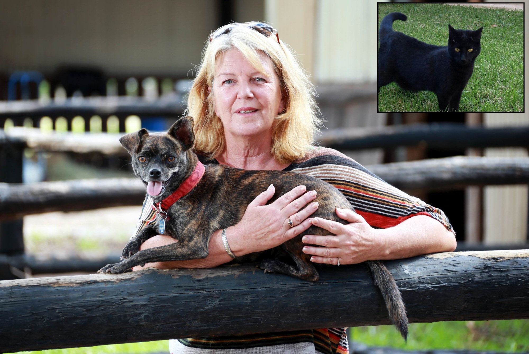 Di Bawden with her dog Chewey. Inset: Squeek is now living it up in Melbourne.  Picture: David Baylis  d452651