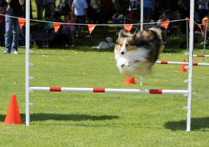 The fur will fly at the City of Joondalup's annual Dogs Day Out this weekend.