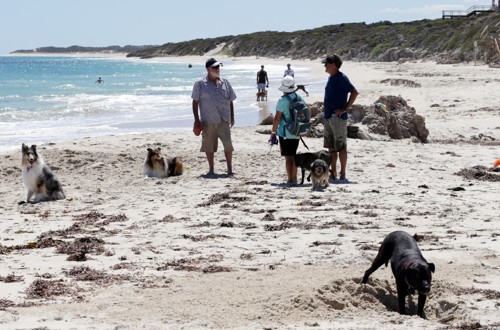Bid for dog beach may be leashed