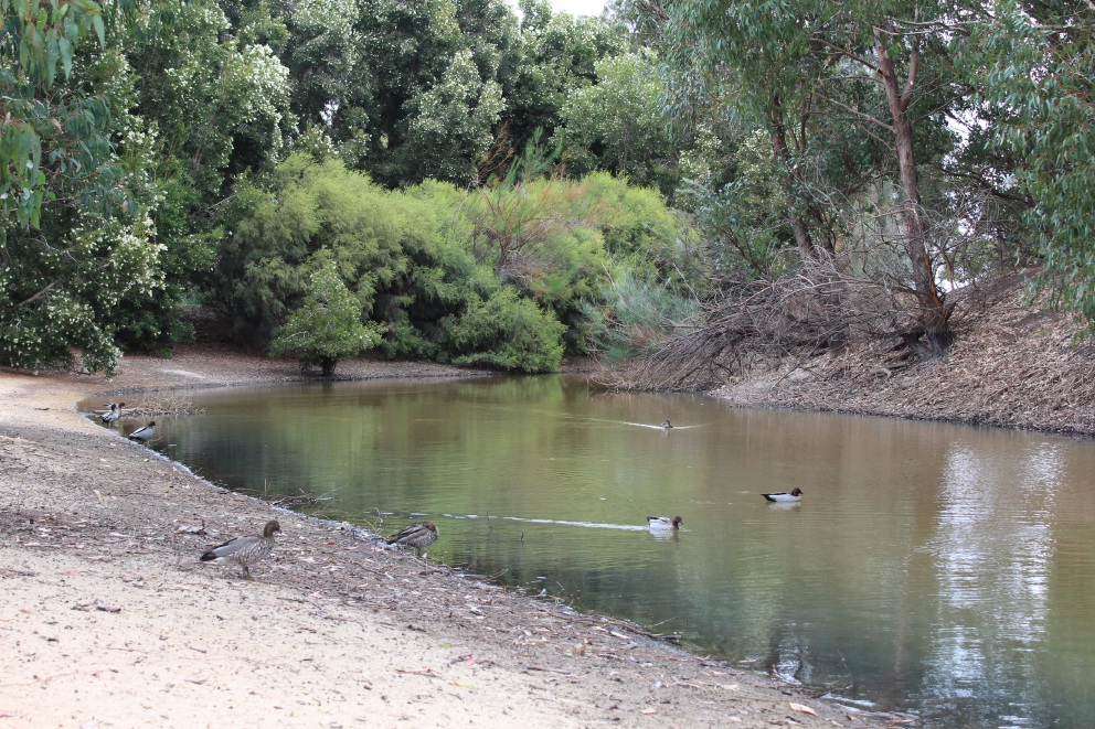More than 63 native birds have died of botulism in the past two weeks at the Shearwater Wetland in Balcatta.