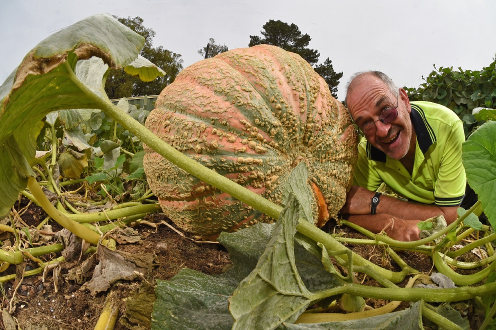 Dwellingup: giant pumpkin competition