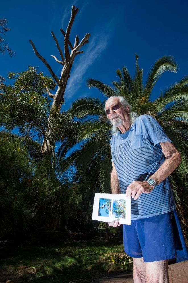 Frank Penistan and the poisoned tree. Picture: Matt Jelonek www.communitypix.com.au   d451038