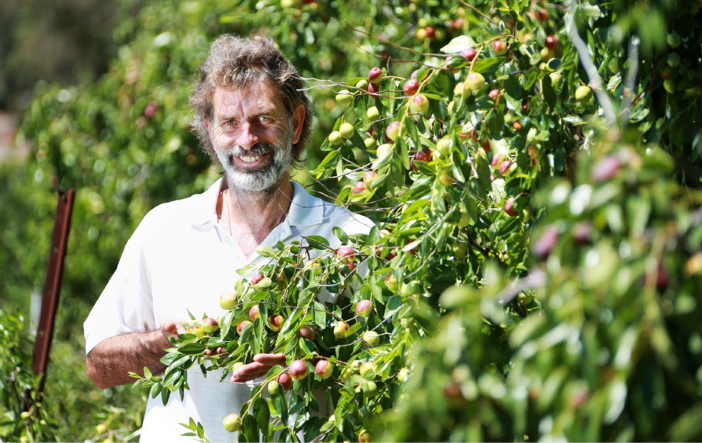"Peter Dawson in his jujube orchard: ""We are getting inquiries from markets in Sydney and Melbourne who want 100 trees. We can't keep up with the demand!""  Picture: David Baylis          d450612"
