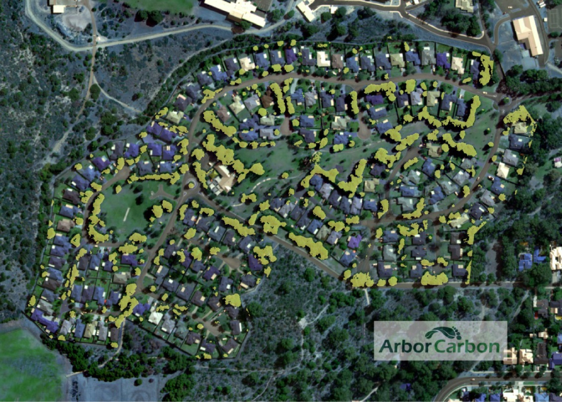 Arbor Carbon's graphic showing tree canopy higher than three metres coloured in yellow.