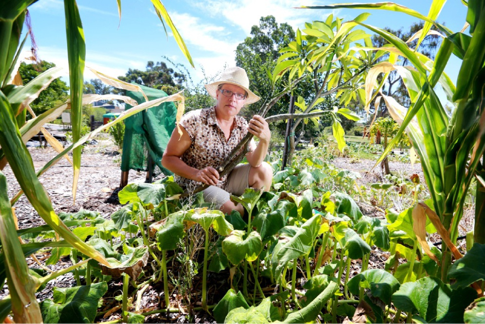 Lockridge Community Garden volunteer Kate Poll seen here with plants damaged by vandals.  Picture: David Baylis        www.communitypix.com.au   d450138