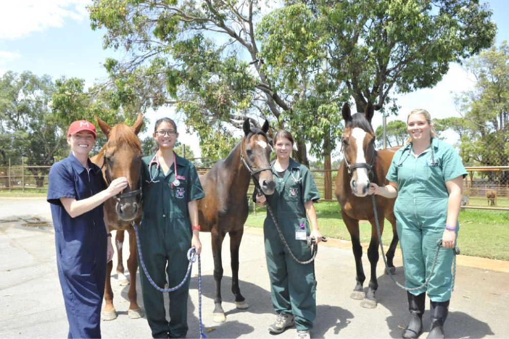 Veterinarian Annemarie Cullimore (left) with the horses and some of the veterinary students who helped treat them.