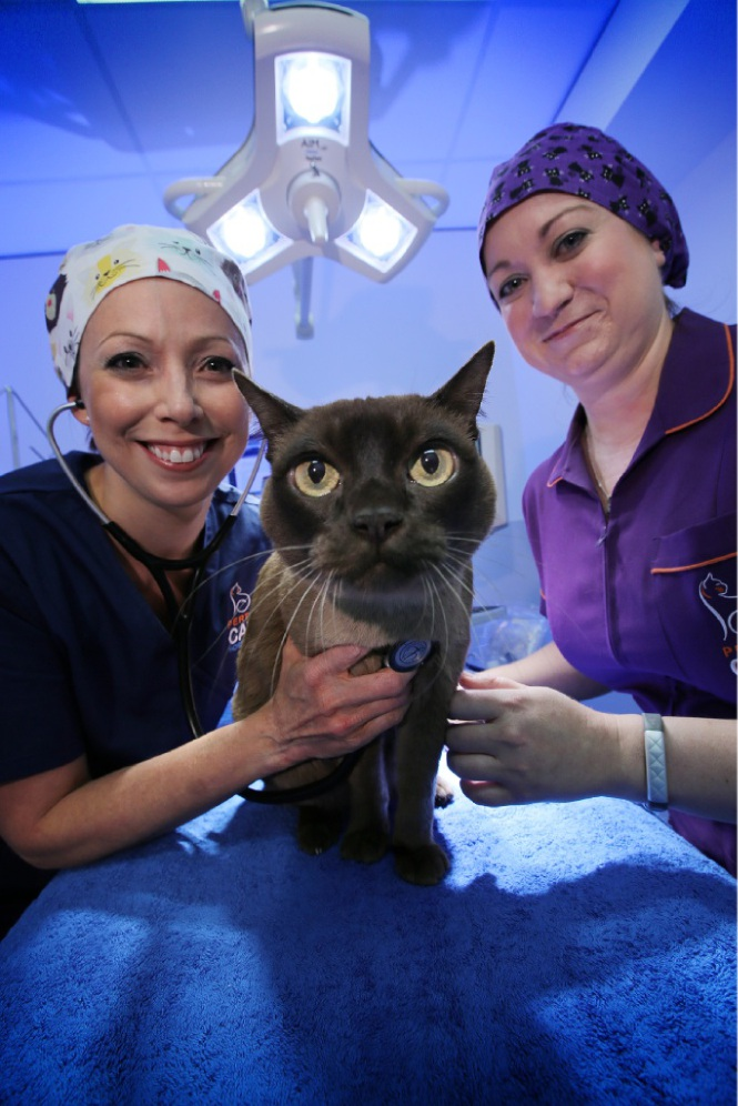 Dr Martine van Boeijen with Rollie the cat and head nurse Colleen O'Meara at the Perth Cat Hospital.  Picture: Andrew Ritchie d449802