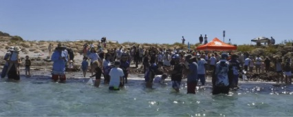 Hundreds help to release snapper