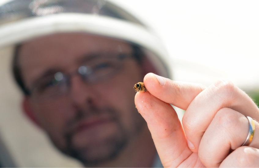 Boris Baer with a male bee. Picture: Jon Bassett