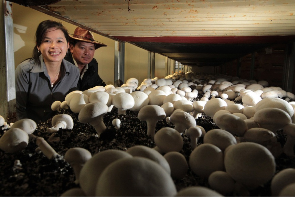 Nguyet and Tiep Doan expanded Lion Mushrooms to meet buyers' demand.