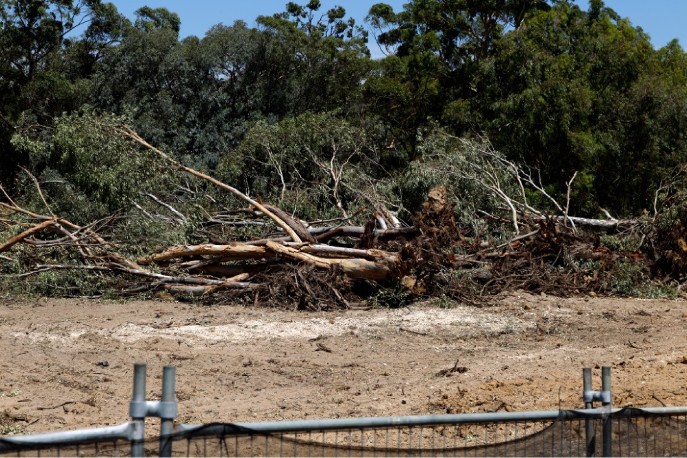 Marri trees on the corner of  Warrington Road and Mead Street were cut down, destroying a foraging place for black cockatoos.