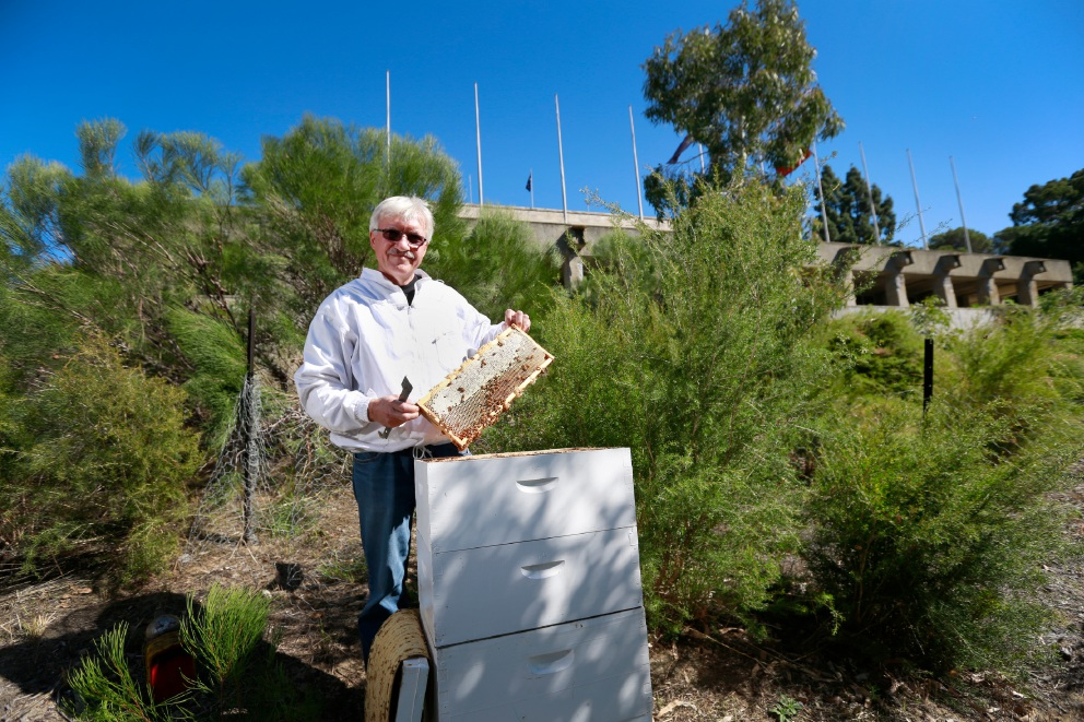 Joseph Kwintowski has set up a collection of bee hives at Parliament House, believed to be the first Australian parliament to do so. Picture: Andrew Ritchie d451884