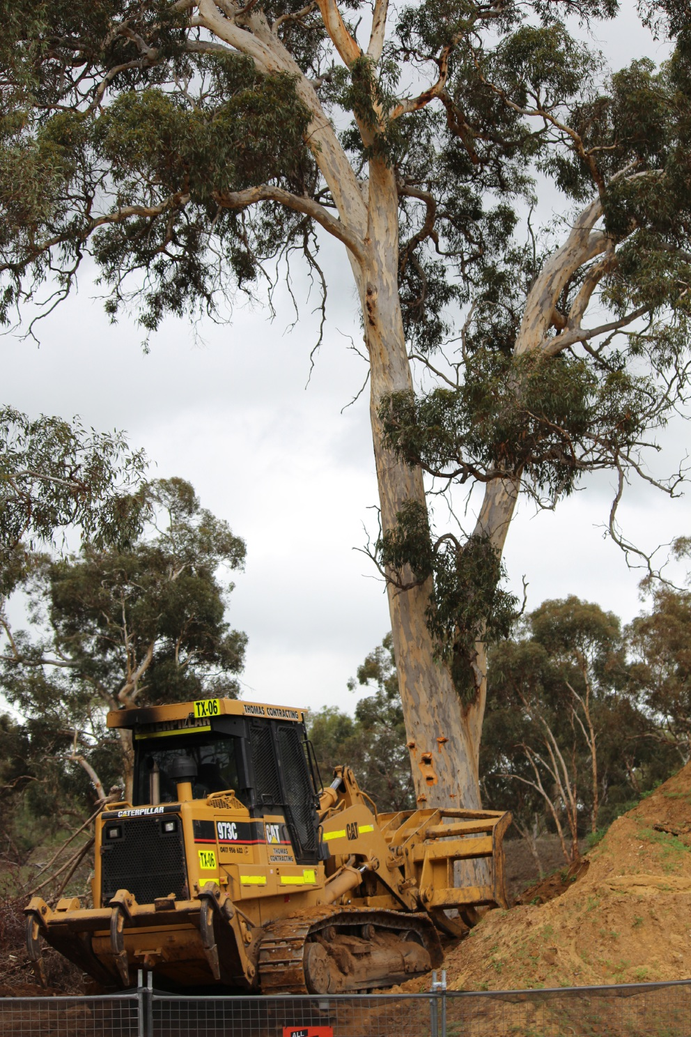 Wandoo trees bulldozed for Pindan housing development in Viveash