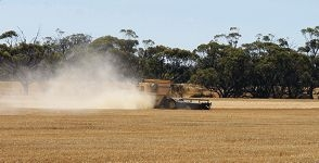 Wheat being harvested near York.
