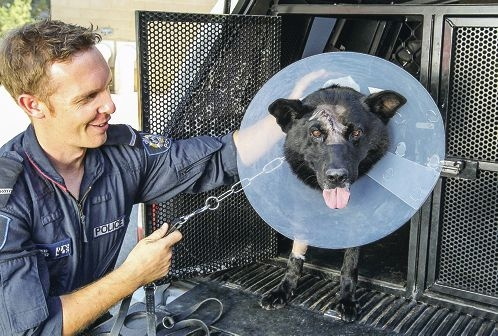 First Class Constable Andrew Reid with police dog Vector, who was struck in the head with an axe.