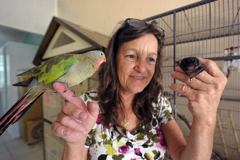 WildAmbo Marilee Burtt, pictured with Jack the Corella and a