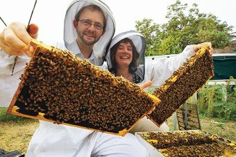 UWA scientists Barbara Baer-Imhoof and Boris Baer will feature in German documentary, More Than Honey. Picture: Andrew Ritchie www.communitypix.com.au d400232
